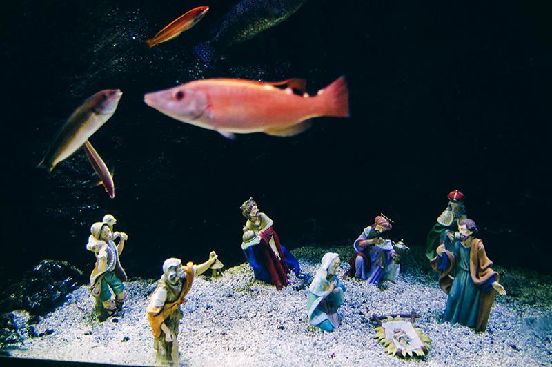 Belén del Aquarium. // Foto: Santiago Farizano