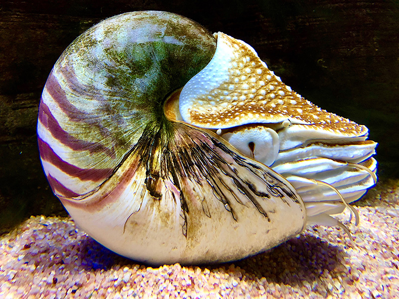 Foto: Aquarium
