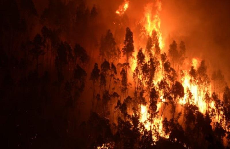 Imagen de un incendio en Portugal. Foto: Naturkon