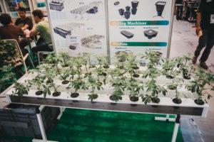 DSF1254 300x200 - El mundo (aún por conocer) del cannabis se abre en Expogrow