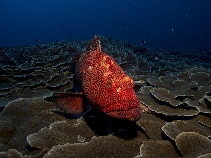 ¿A quién no le fascina la belleza de las profundidades?