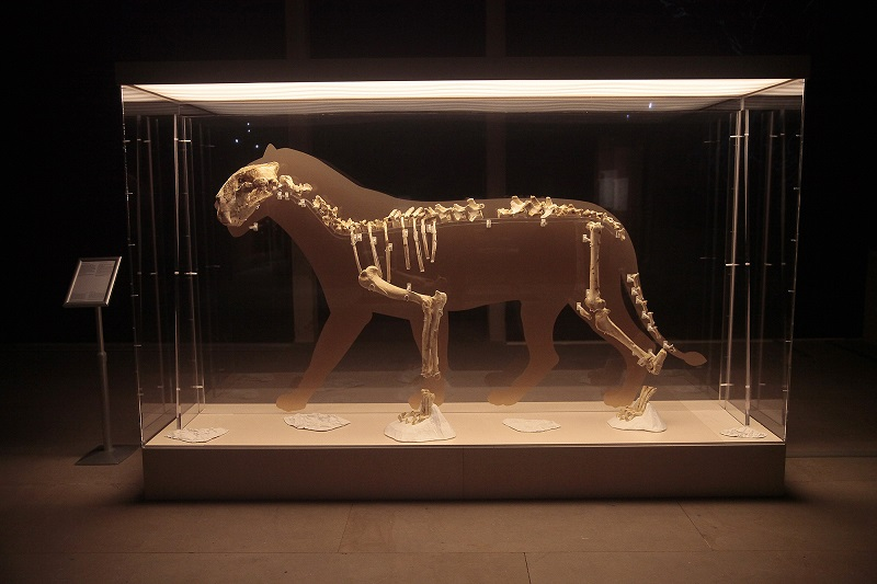 El león de Arrikrutz. Foto: Oskar Moreno/San Telmo Museoa.