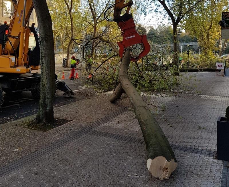 Talas de árboles en Donostia. Foto: Eguzki.