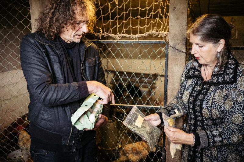 Recogida de muestras hoy en un gallinero de Zubieta. Fotos: Santiago Farizano