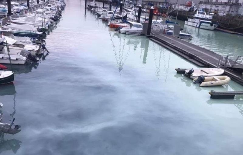 Tono blancuzco en las aguas de la dársena de La Herrera, el martes en la bahía de Pasaia.