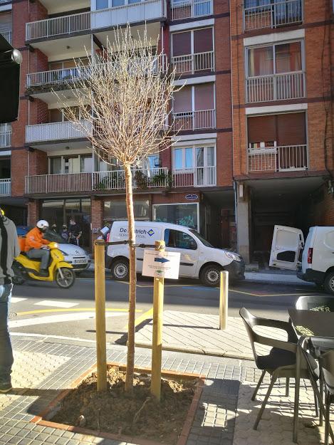 colillas2 - Los alcorques se convierten en ceniceros en Donostia