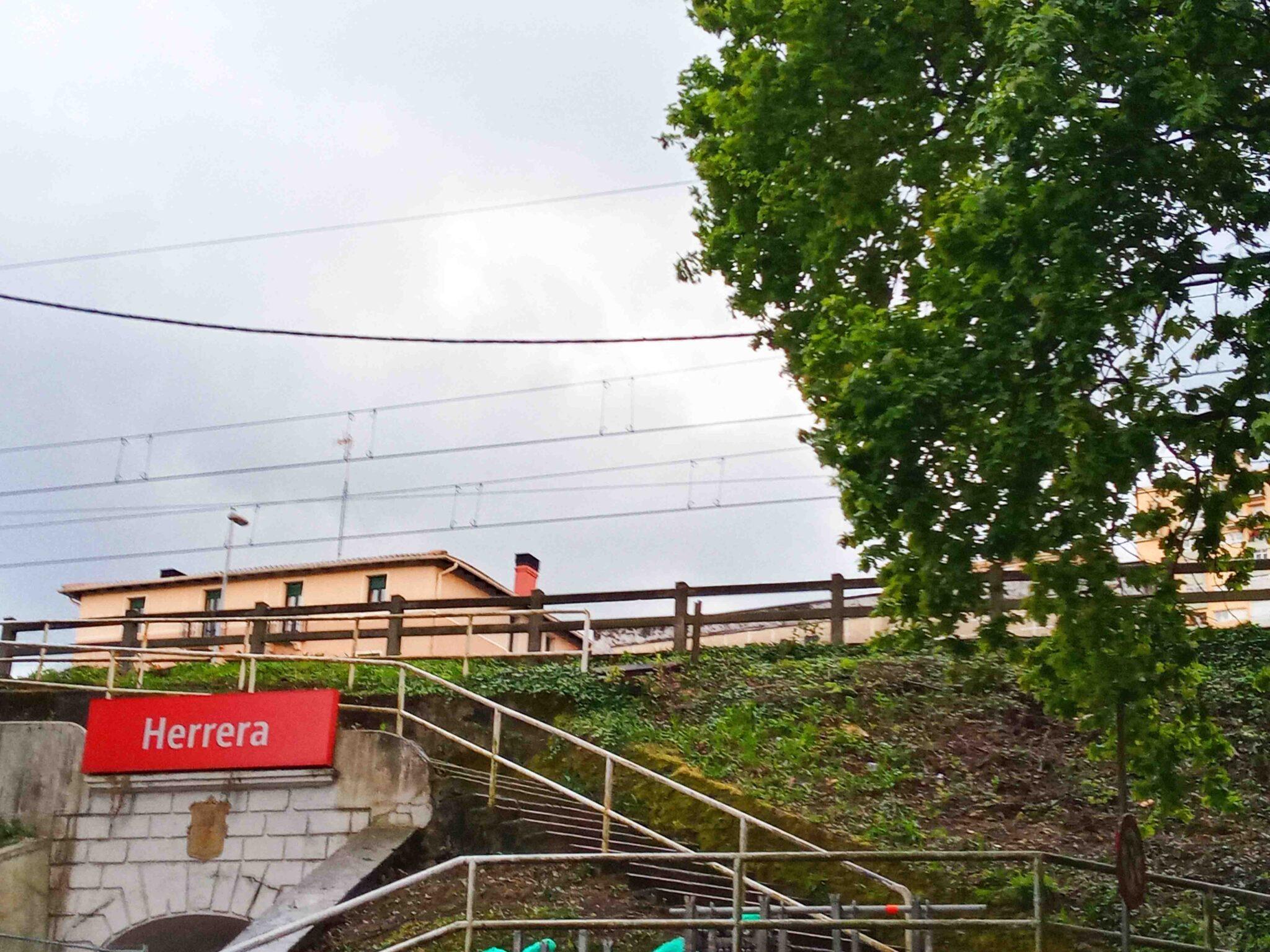 roble cables scaled - El roble de Herrera está 'huérfano' de apoyo institucional, denuncia Parkea Bizirik