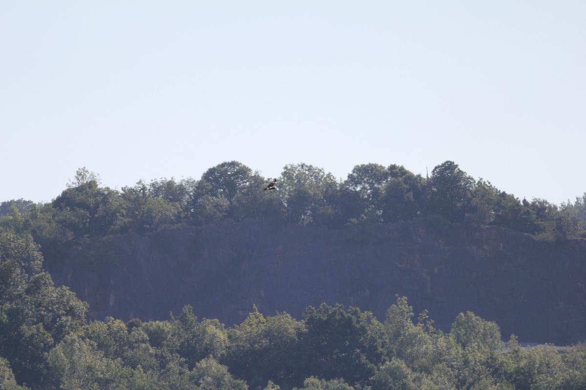 VRA 2 - Un buitre negro se observa por primera vez en Donostia