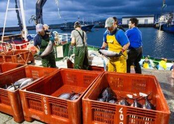 Pesca del bonito. Foto: Gobierno vasco