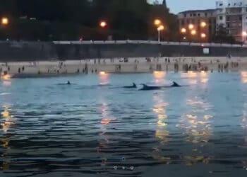 Imagen del vídeo de los delfines en Donostia. Redes sociales.